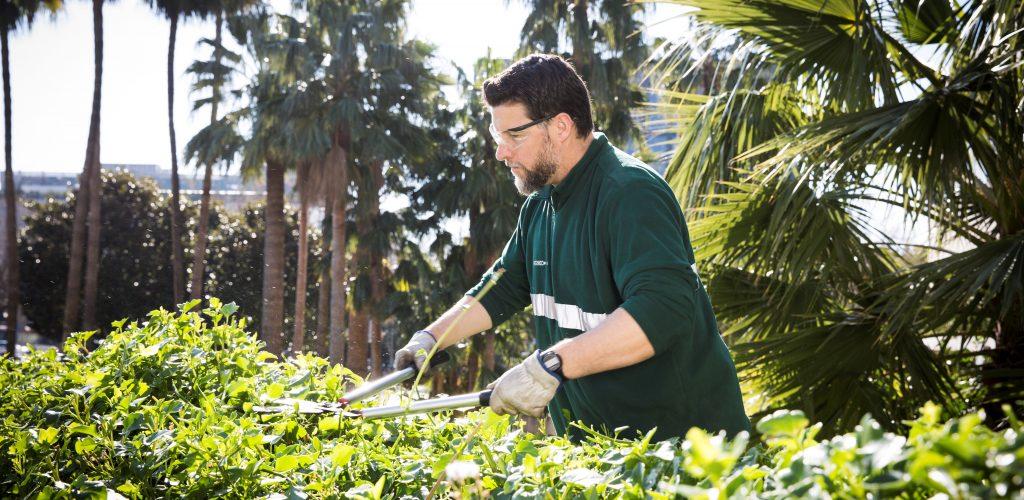 ventajas servicios verdalis